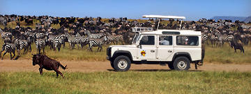 Company photo from Thomson Safaris