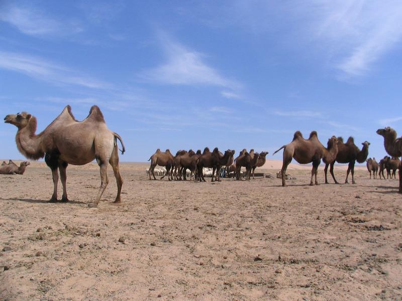 Overland Gobi Desert Expedition Tour