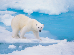 Arctic