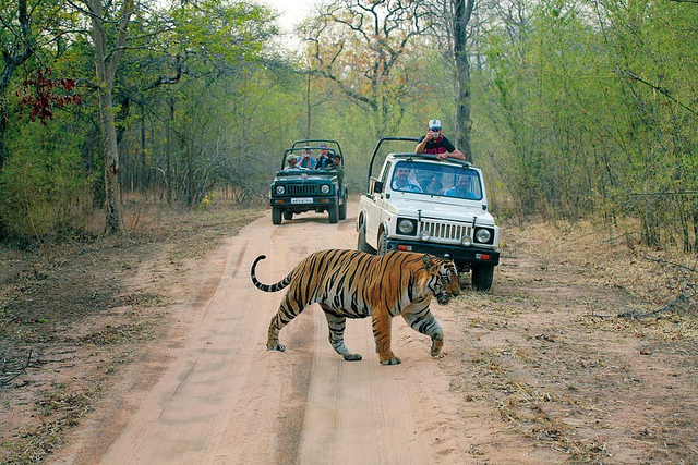 India, Ranthambhore, New Delhi, Agra, Jaipur, Asia, Golden Triangle